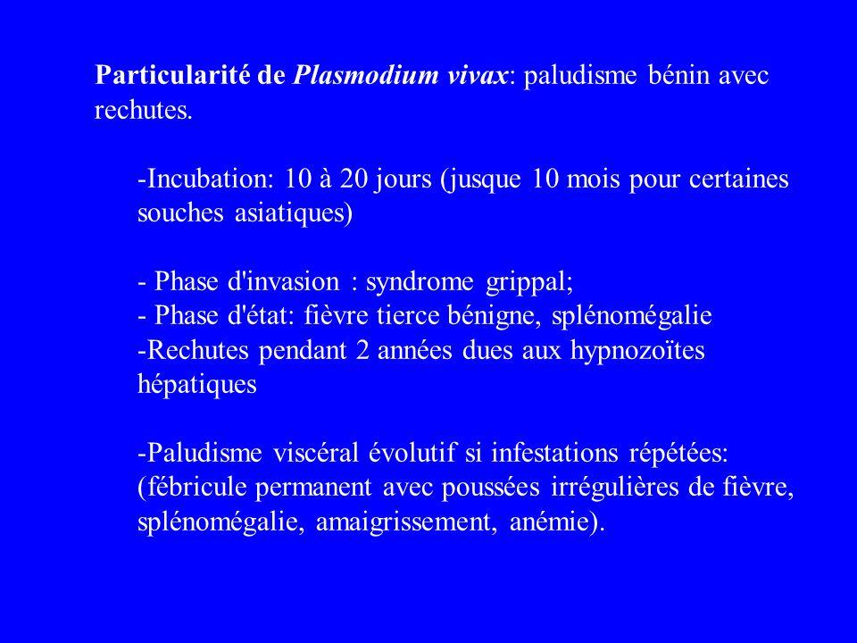 Particularité de Plasmodium vivax: paludisme bénin avec rechutes. -Incubation: 10 à 20 jours (jusque 10 mois pour certaines souches asiatiques) - Phas