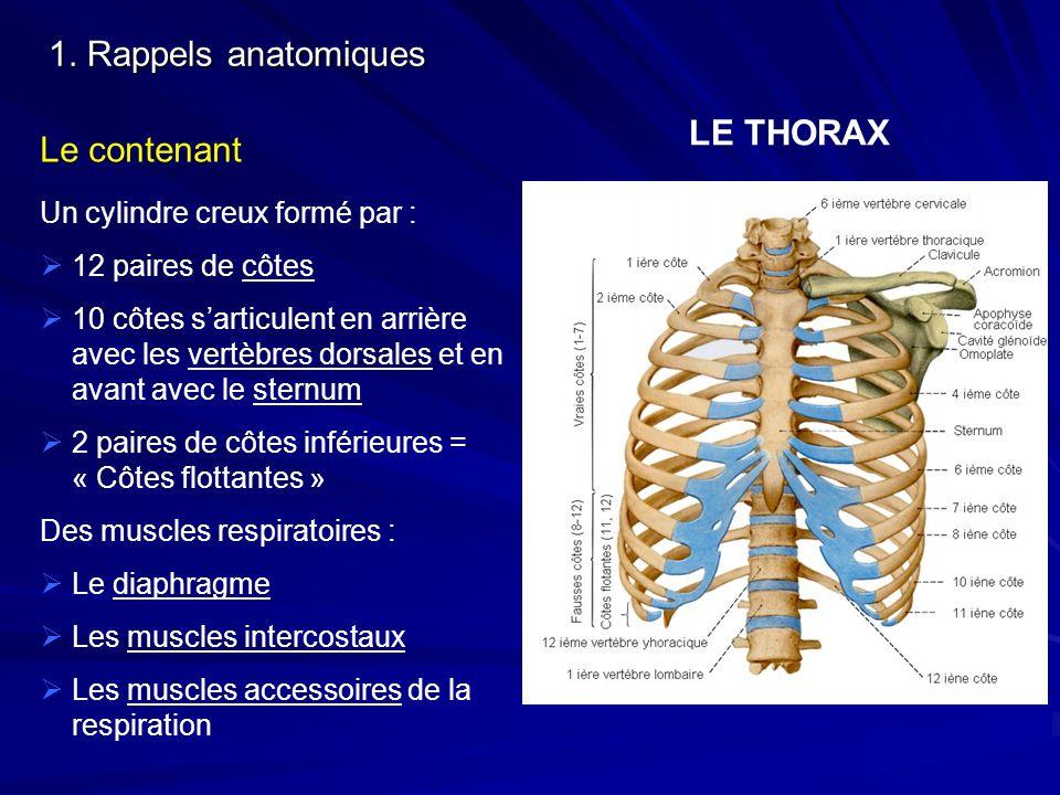 LE THORAX Un cylindre creux formé par : 12 paires de côtes 10 côtes sarticulent en arrière avec les vertèbres dorsales et en avant avec le sternum 2 p