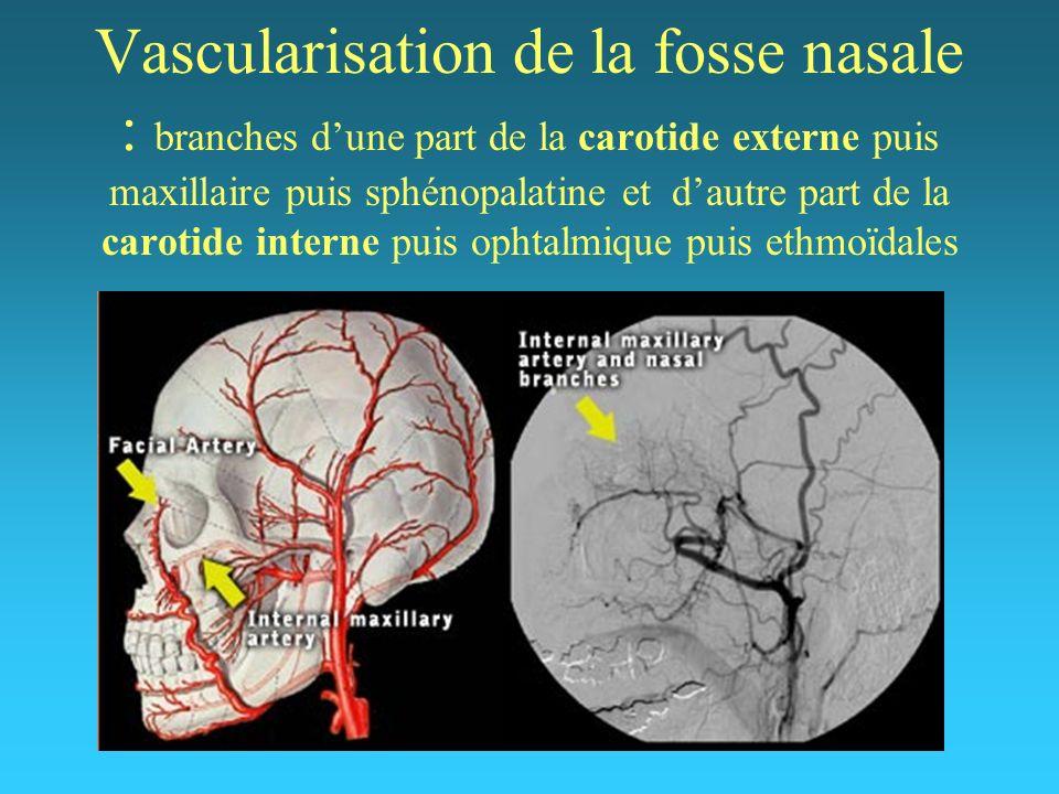 Vascularisation de la fosse nasale : branches dune part de la carotide externe puis maxillaire puis sphénopalatine et dautre part de la carotide inter