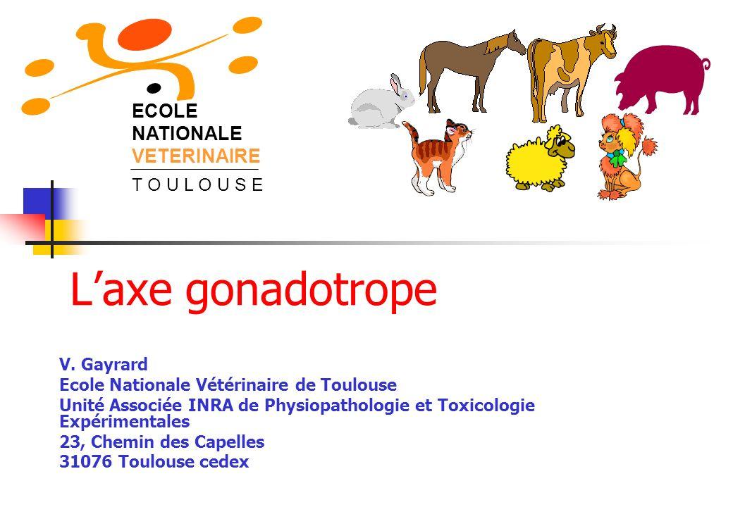 ECOLE NATIONALE VETERINAIRE T O U L O U S E Laxe gonadotrope V. Gayrard Ecole Nationale Vétérinaire de Toulouse Unité Associée INRA de Physiopathologi