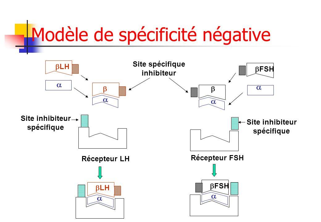 LH FSH LH FSH Récepteur LH Récepteur FSH Site spécifique inhibiteur Site inhibiteur spécifique Site inhibiteur spécifique Modèle de spécificité négati