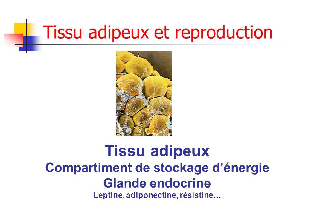 Tissu adipeux Compartiment de stockage dénergie Glande endocrine Leptine, adiponectine, résistine… Tissu adipeux et reproduction