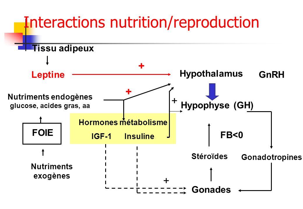 Hypothalamus Hypophyse (GH) Gonades GnRH Gonadotropines Tissu adipeux Leptine FOIE Nutriments endogènes glucose, acides gras, aa Hormones métabolisme