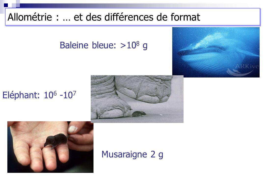 Baleine bleue: >10 8 g Musaraigne 2 g Eléphant: 10 6 -10 7 Allométrie : … et des différences de format
