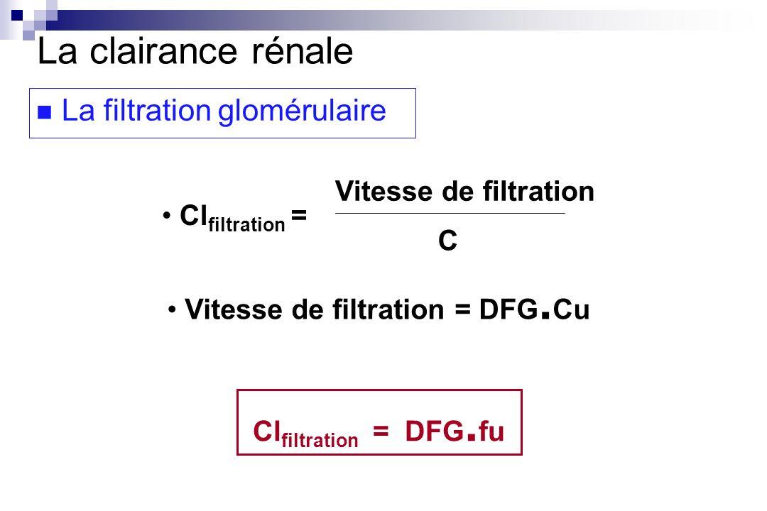 Cl filtration = Vitesse de filtration C Vitesse de filtration = DFG. Cu Cl filtration = DFG. fu La clairance rénale La filtration glomérulaire