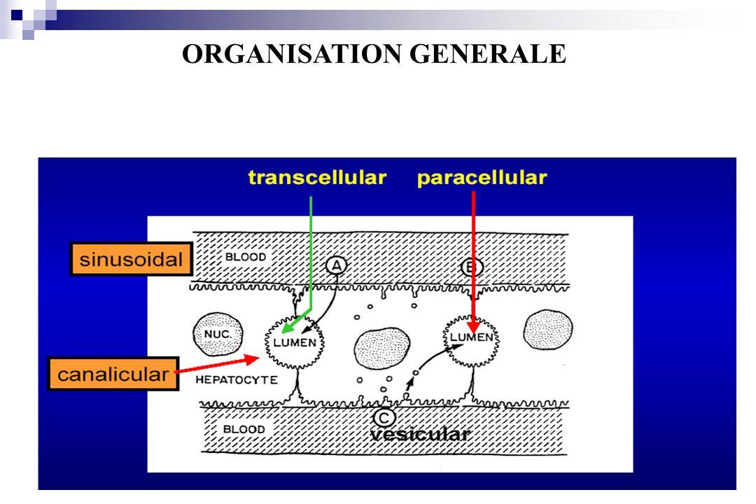 canalicular ORGANISATION GENERALE