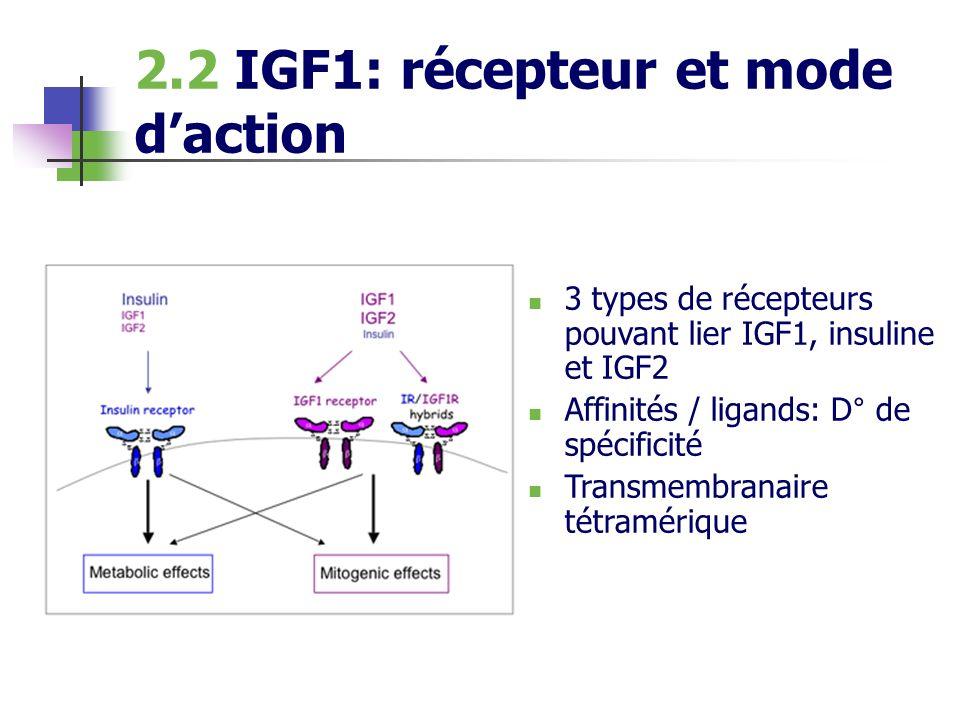 2.2 IGF1: récepteur et mode daction 3 types de récepteurs pouvant lier IGF1, insuline et IGF2 Affinités / ligands: D° de spécificité Transmembranaire