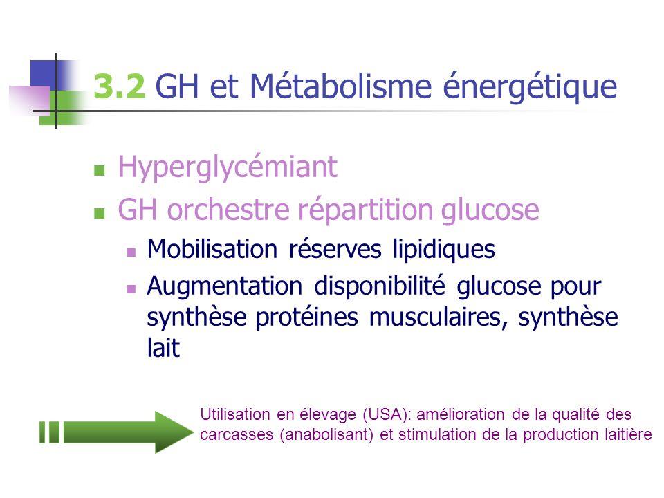 3.2 GH et Métabolisme énergétique Hyperglycémiant GH orchestre répartition glucose Mobilisation réserves lipidiques Augmentation disponibilité glucose