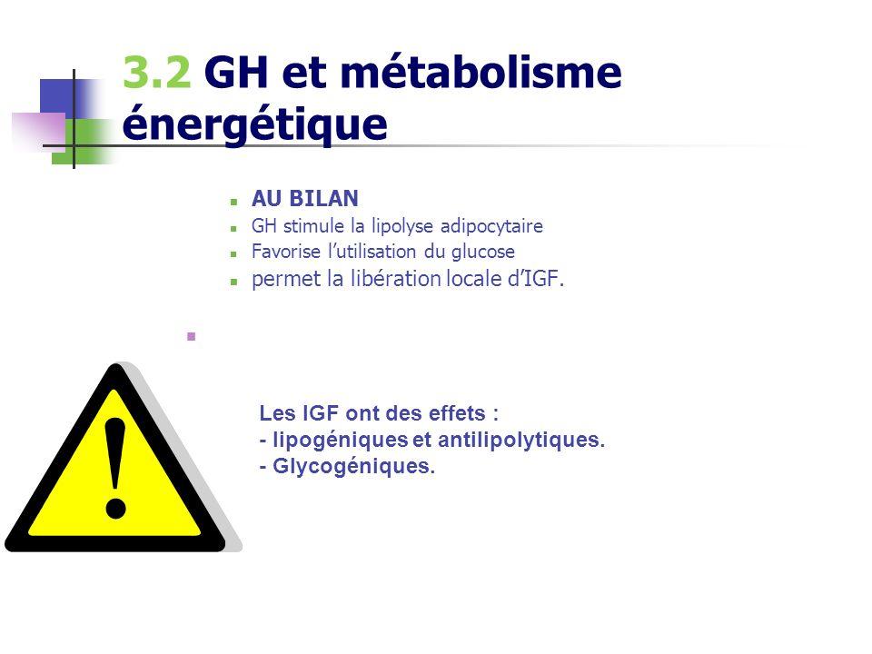 3.2 GH et métabolisme énergétique AU BILAN GH stimule la lipolyse adipocytaire Favorise lutilisation du glucose permet la libération locale dIGF. Les
