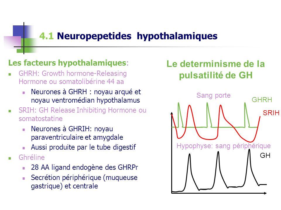 4.1 Neuropepetides hypothalamiques Les facteurs hypothalamiques: GHRH: Growth hormone-Releasing Hormone ou somatolibérine 44 aa Neurones à GHRH : noya