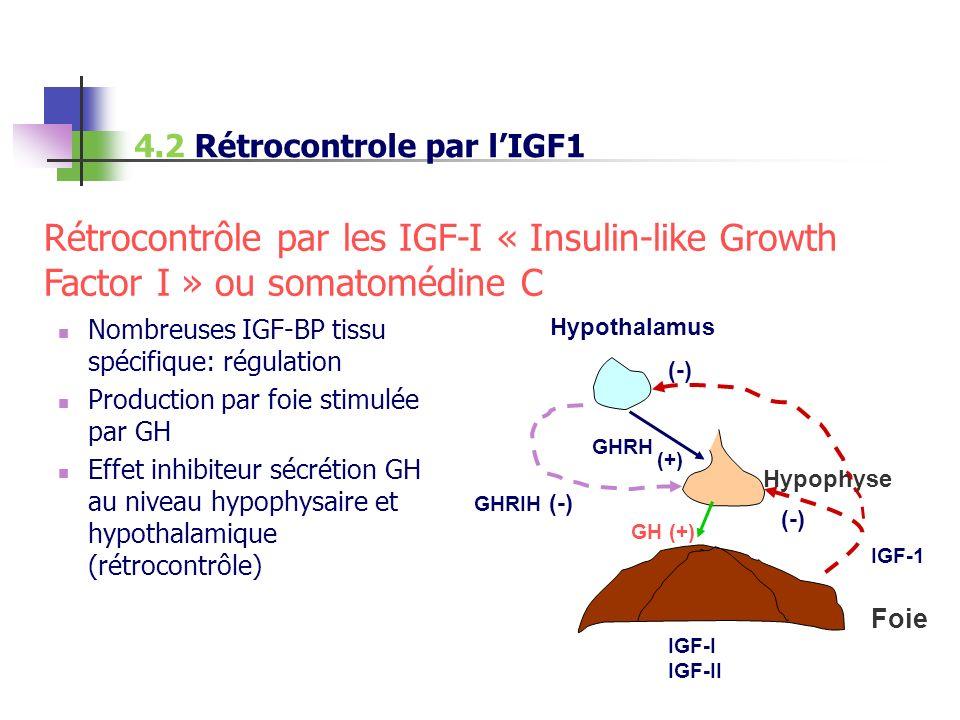 Nombreuses IGF-BP tissu spécifique: régulation Production par foie stimulée par GH Effet inhibiteur sécrétion GH au niveau hypophysaire et hypothalami