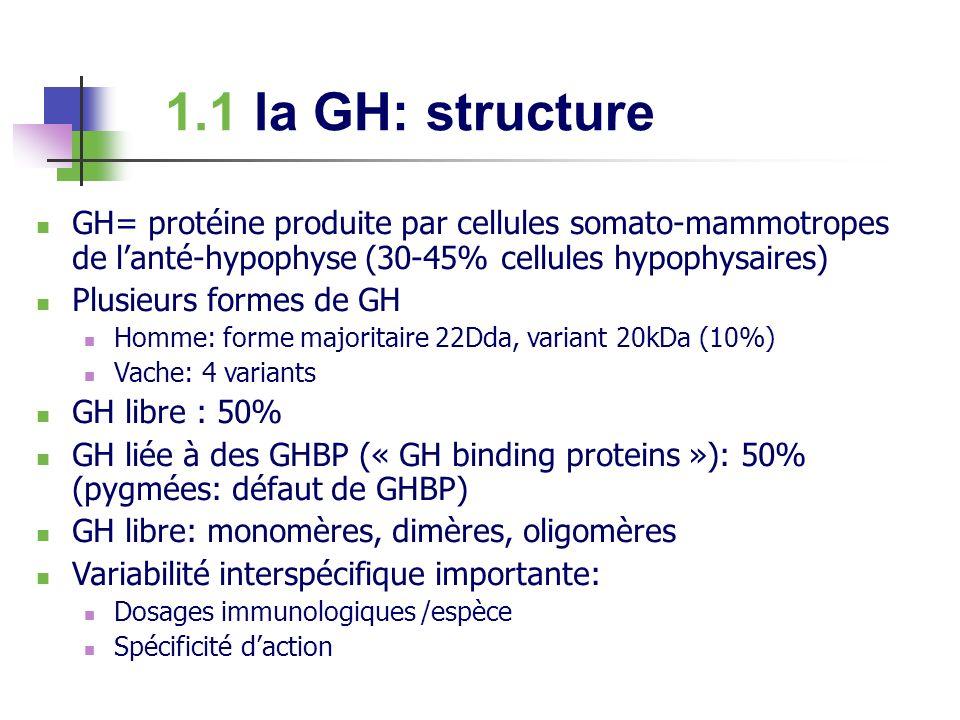 1.1 la GH: structure GH= protéine produite par cellules somato-mammotropes de lanté-hypophyse (30-45% cellules hypophysaires) Plusieurs formes de GH H