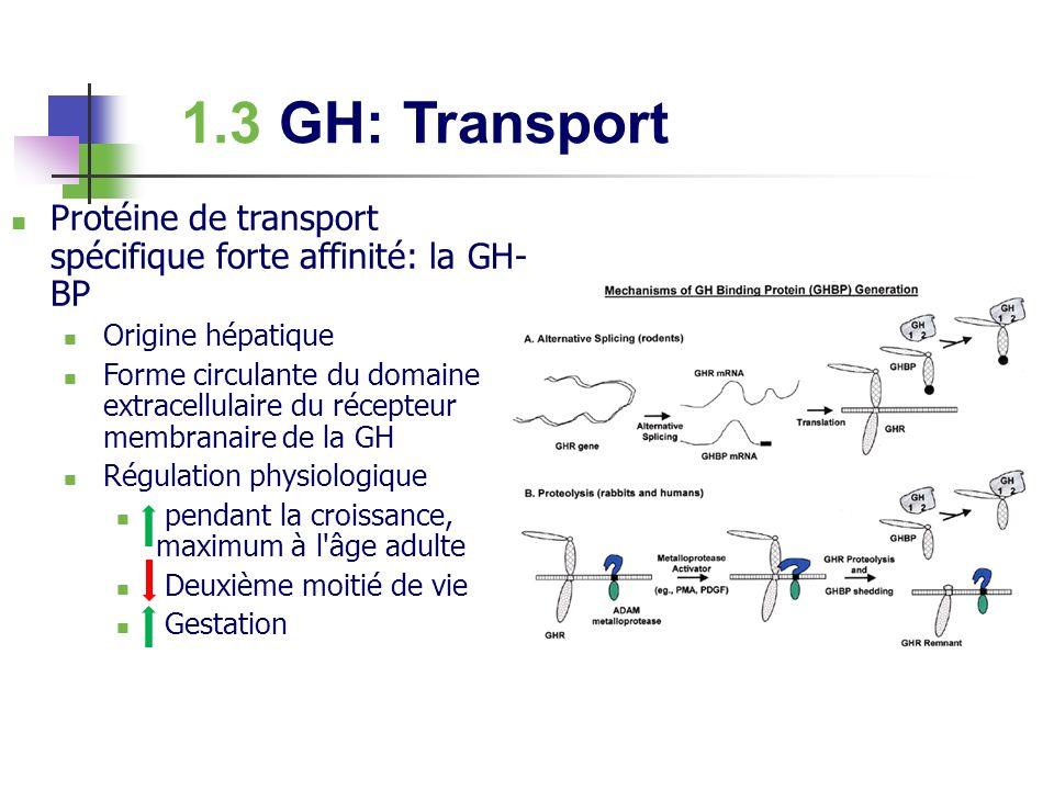 1.3 GH: Transport Protéine de transport spécifique forte affinité: la GH- BP Origine hépatique Forme circulante du domaine extracellulaire du récepteu