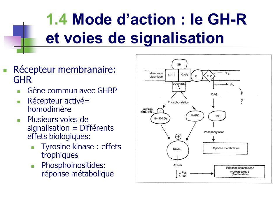 3.3 Effets somatogéniques Médiation par laction des IGF-I Liaison IGF-I aux IGF-binding proteines plasmatiques (6 IGF-BP): 95% Syndrome de Laron: mutation du gène du récepteur GH affectant la dimérisation (diminution IGF-I, nanisme)
