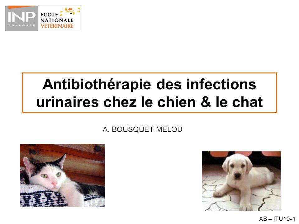 AB – ITU10- 42 Antibiothérapie dirigée – La nature du pathogène est connue – Sa sensibilité est connue Antibiogramme CMI