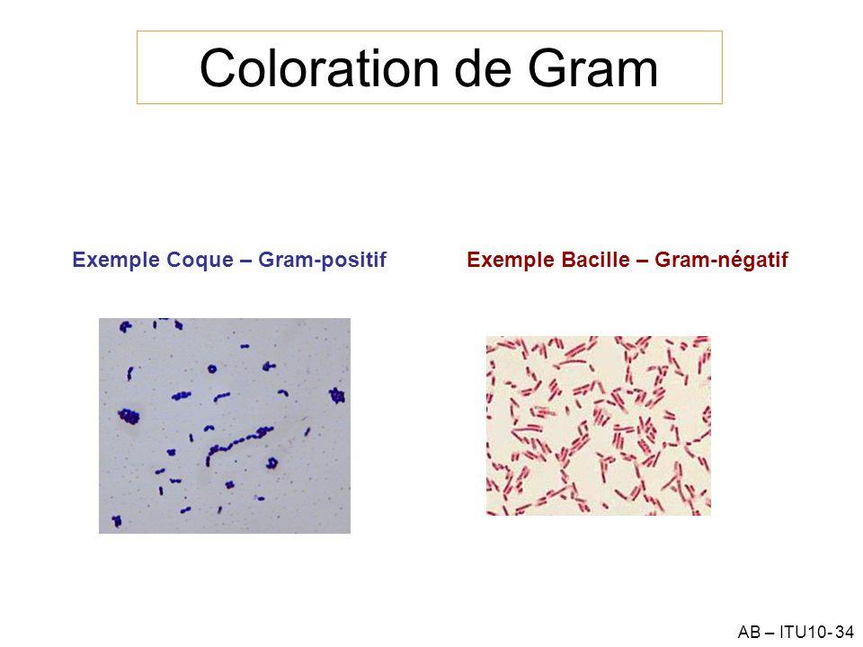 AB – ITU10- 34 Coloration de Gram Exemple Coque – Gram-positifExemple Bacille – Gram-négatif