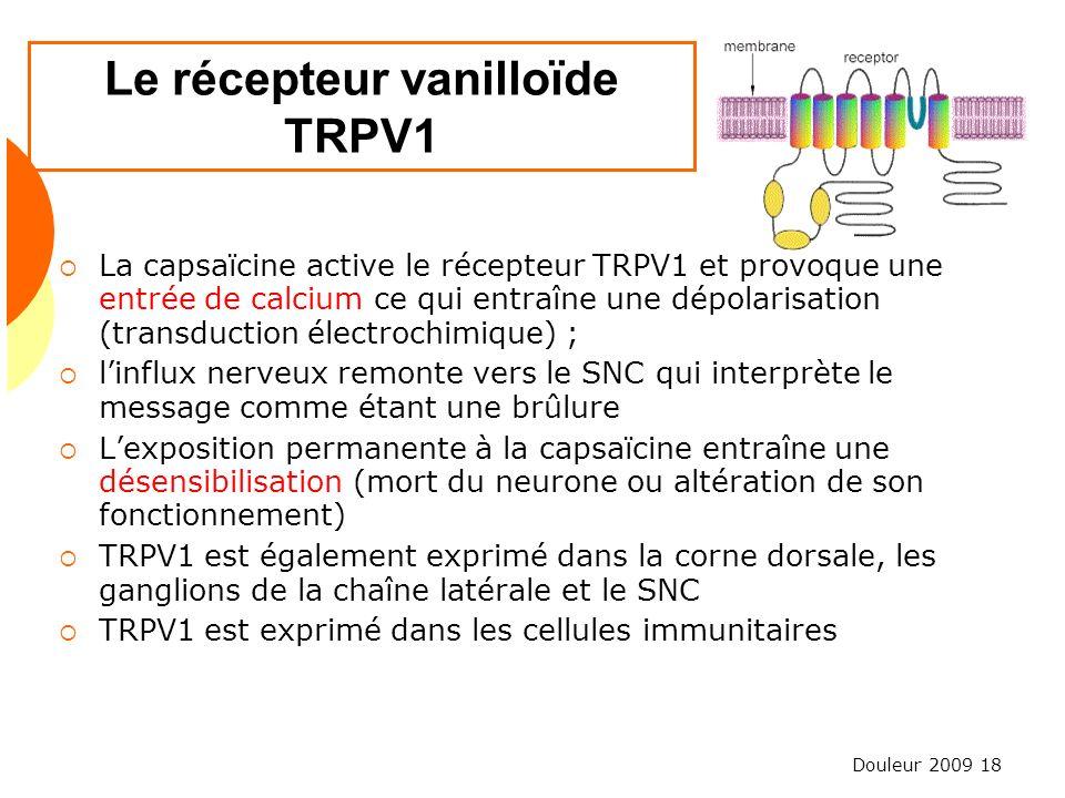 Douleur 2009 18 Le récepteur vanilloïde TRPV1 La capsaïcine active le récepteur TRPV1 et provoque une entrée de calcium ce qui entraîne une dépolarisa