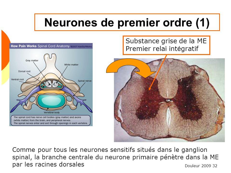 Douleur 2009 32 Neurones de premier ordre (1) Substance grise de la ME Premier relai int é gratif Comme pour tous les neurones sensitifs situés dans l