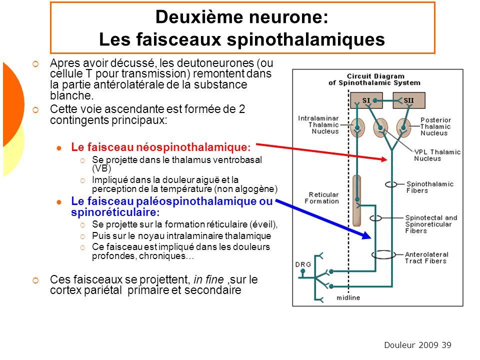Douleur 2009 39 Deuxième neurone: Les faisceaux spinothalamiques Apres avoir décussé, les deutoneurones (ou cellule T pour transmission) remontent dan