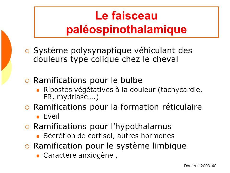Douleur 2009 40 Le faisceau paléospinothalamique Système polysynaptique véhiculant des douleurs type colique chez le cheval Ramifications pour le bulb