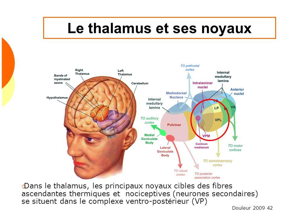 Douleur 2009 42 Le thalamus et ses noyaux Dans le thalamus, les principaux noyaux cibles des fibres ascendantes thermiques et nociceptives (neurones s