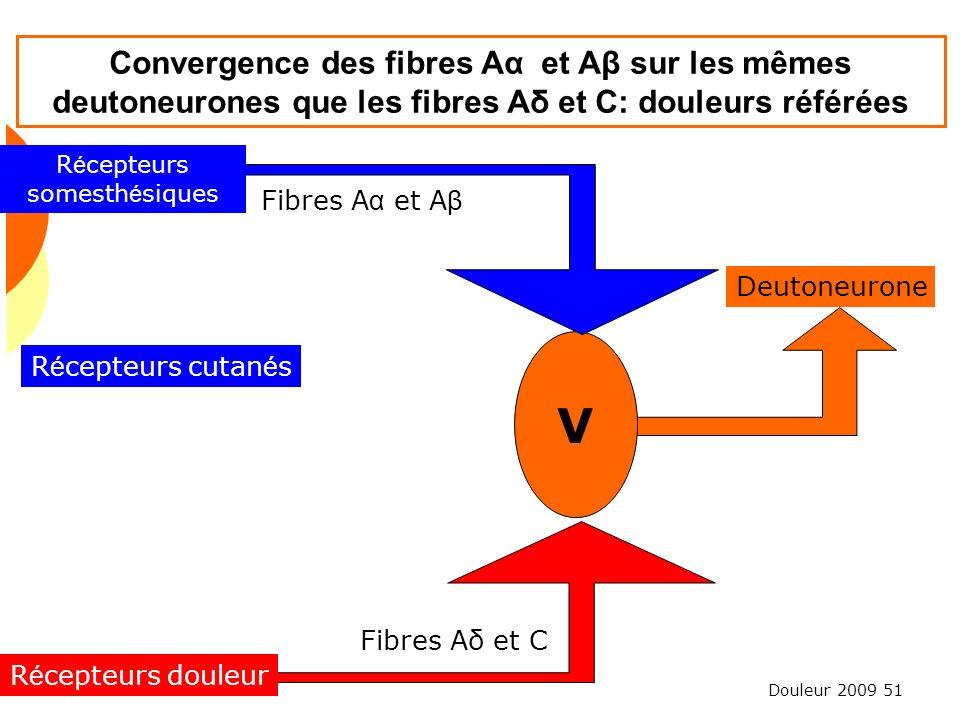 Douleur 2009 51 Convergence des fibres Aα et Aβ sur les mêmes deutoneurones que les fibres Aδ et C: douleurs référées V Fibres Aδ et C Deutoneurone Fi