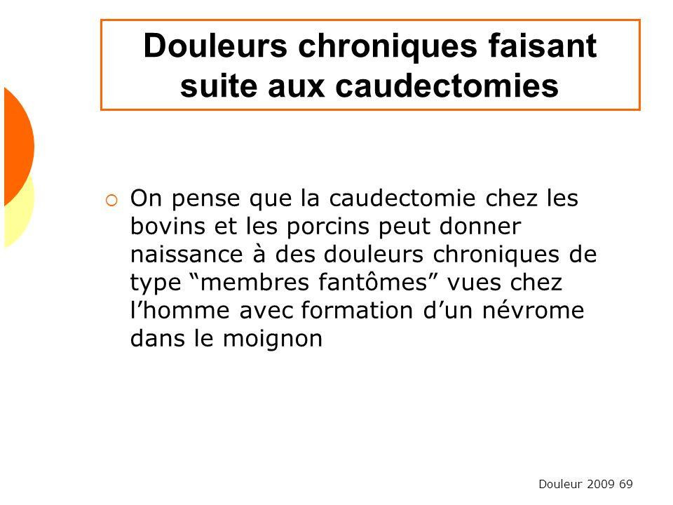 Douleur 2009 69 Douleurs chroniques faisant suite aux caudectomies On pense que la caudectomie chez les bovins et les porcins peut donner naissance à