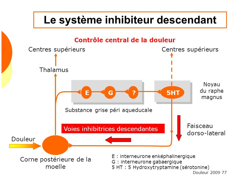 Douleur 2009 77 Le système inhibiteur descendant Contrôle central de la douleur Centres supérieurs Thalamus Douleur Noyau du raphe magnus Faisceau dor