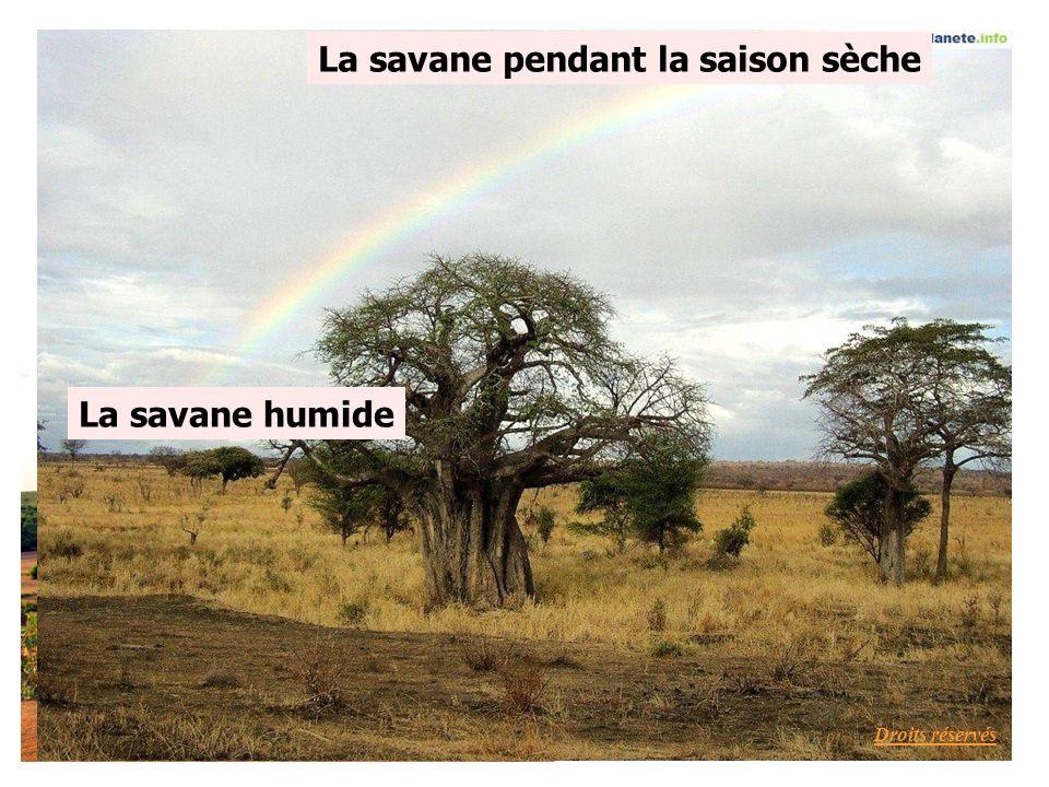 La savane pendant la saison sèche La savane humide Droits réservés