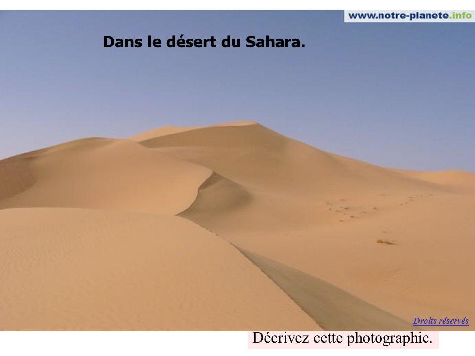 Décrivez cette photographie. Dans le désert du Sahara. Droits réservés