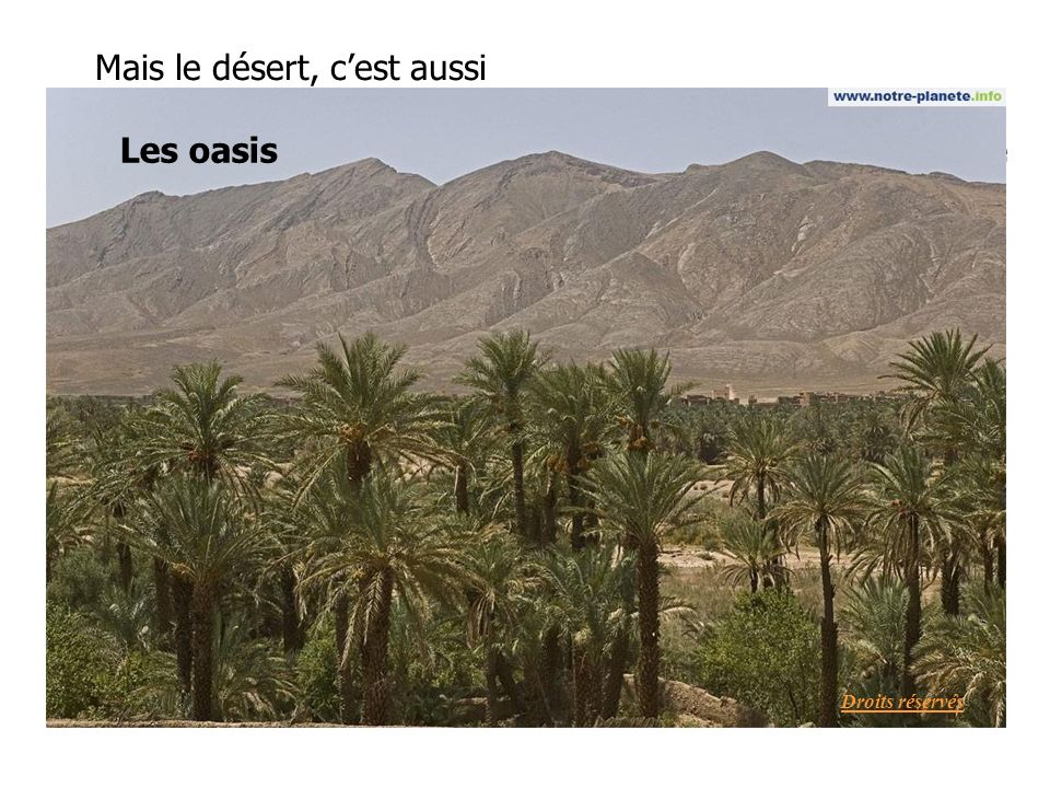 Mais le désert, cest aussi La steppeLes oasis Droits réservés