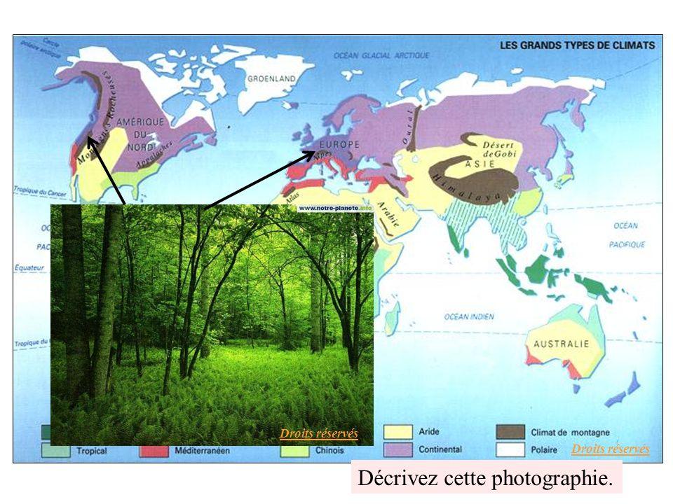 Une forêt de feuillus en Bretagne Droits réservés
