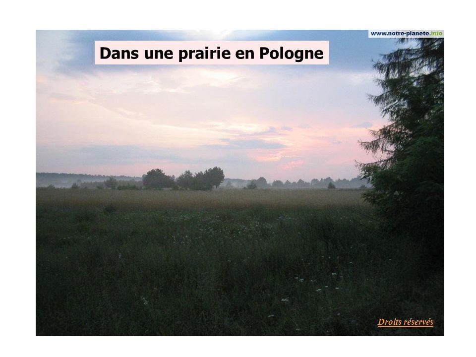 Dans une prairie en Pologne Droits réservés