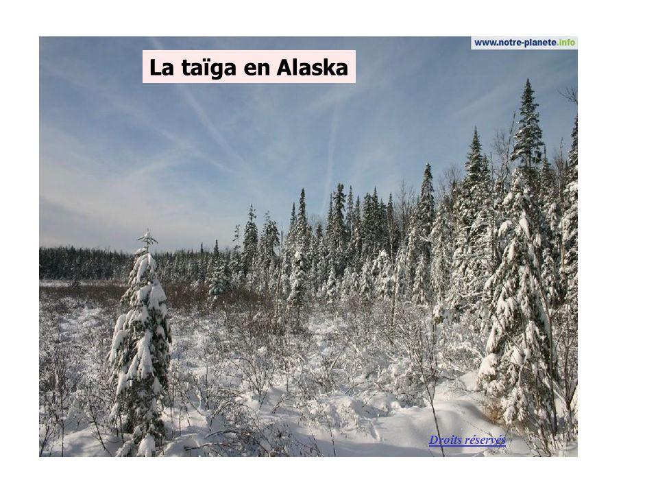 La taïga en Alaska Droits réservés