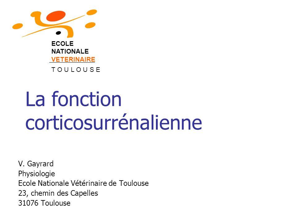La fonction corticosurrénalienne V. Gayrard Physiologie Ecole Nationale Vétérinaire de Toulouse 23, chemin des Capelles 31076 Toulouse ECOLE NATIONALE