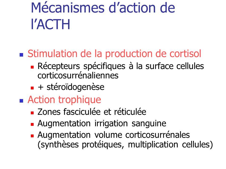 Mécanismes daction de lACTH Stimulation de la production de cortisol Récepteurs spécifiques à la surface cellules corticosurrénaliennes + stéroïdogenè