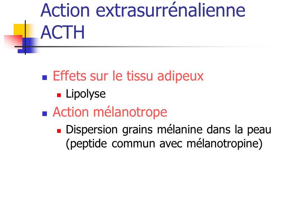 Action extrasurrénalienne ACTH Effets sur le tissu adipeux Lipolyse Action mélanotrope Dispersion grains mélanine dans la peau (peptide commun avec mé