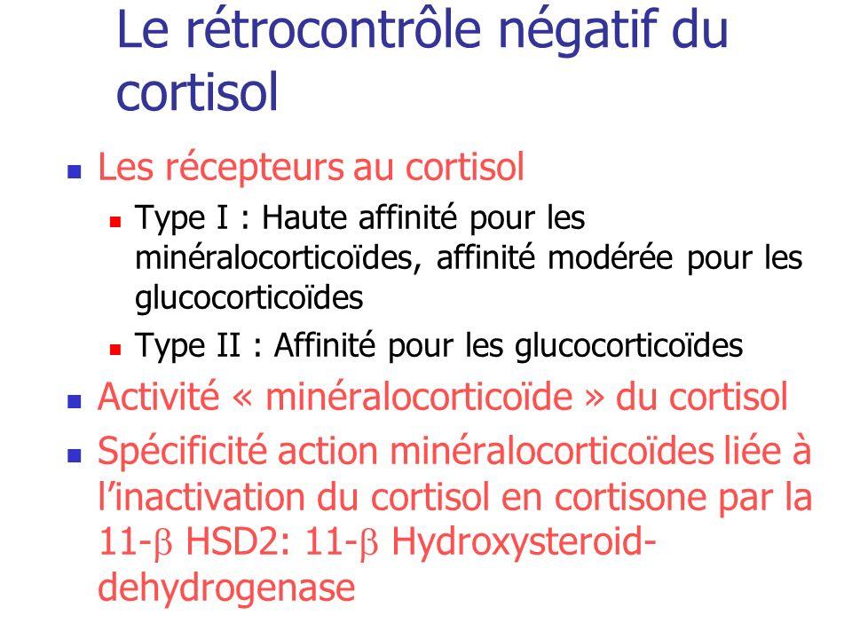 Le rétrocontrôle négatif du cortisol Les récepteurs au cortisol Type I : Haute affinité pour les minéralocorticoïdes, affinité modérée pour les glucoc
