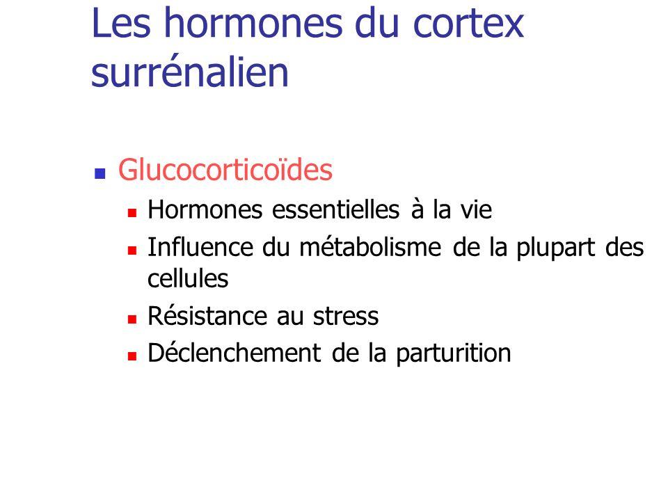 Les hormones du cortex surrénalien Glucocorticoïdes Hormones essentielles à la vie Influence du métabolisme de la plupart des cellules Résistance au s