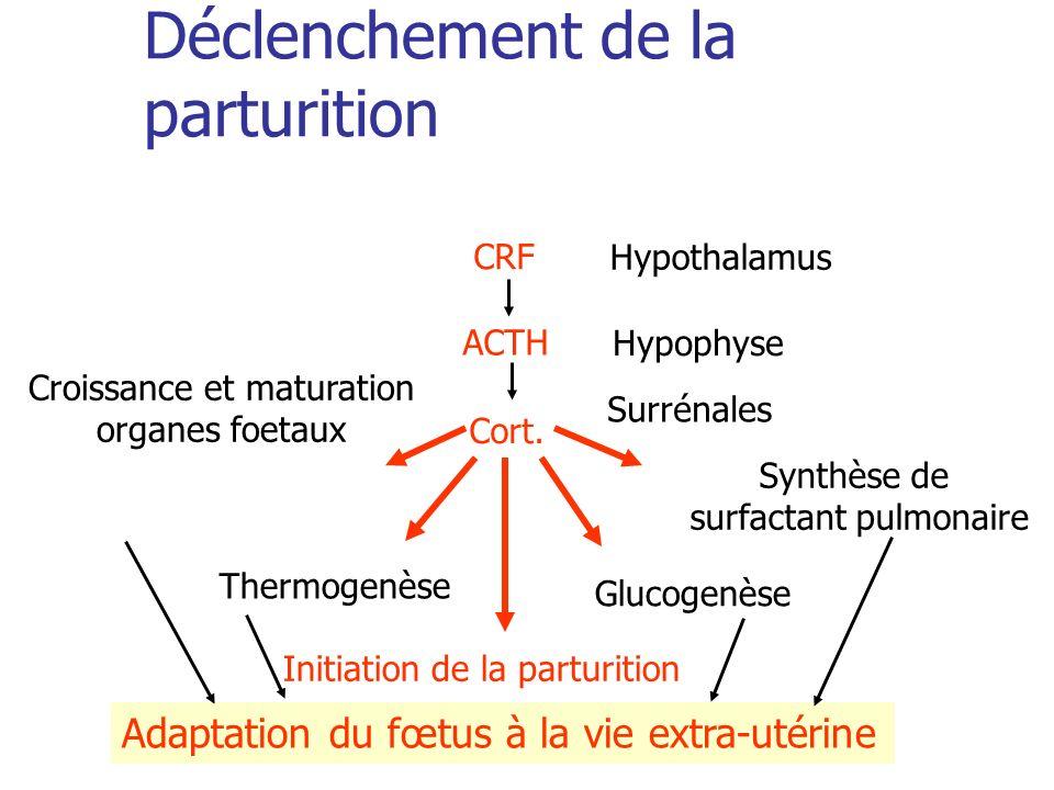 Déclenchement de la parturition CRF ACTH Cort. Croissance et maturation organes foetaux Thermogenèse Glucogenèse Synthèse de surfactant pulmonaire Ini