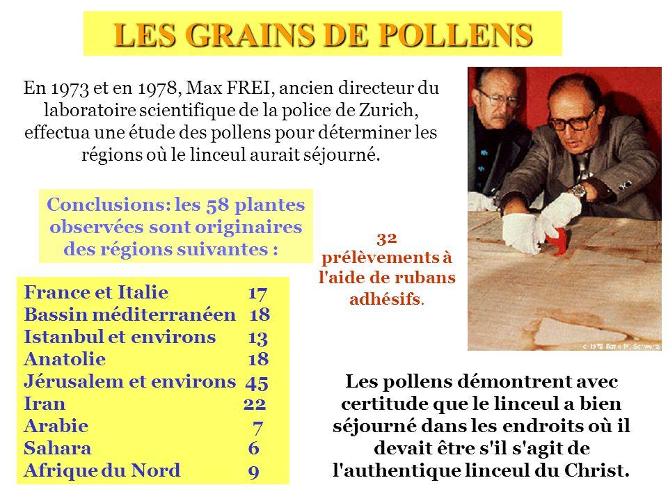 LES GRAINS DE POLLENS Les pollens démontrent avec certitude que le linceul a bien séjourné dans les endroits où il devait être s'il s'agit de l'authen