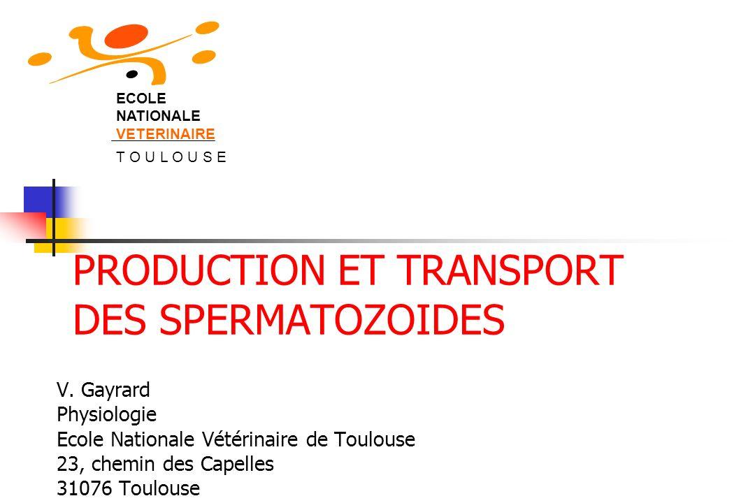 PRODUCTION ET TRANSPORT DES SPERMATOZOIDES V. Gayrard Physiologie Ecole Nationale Vétérinaire de Toulouse 23, chemin des Capelles 31076 Toulouse ECOLE