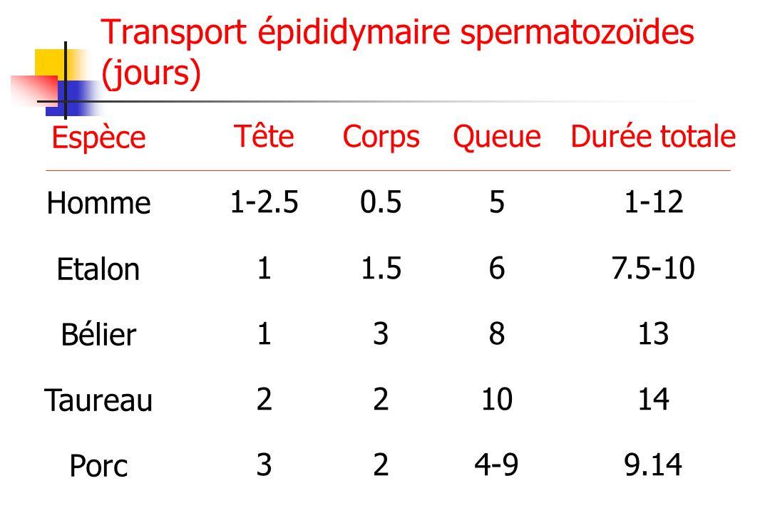 Espèce Homme Etalon Bélier Taureau Porc Tête 1-2.5 1 2 3 Corps 0.5 1.5 3 2 Queue 5 6 8 10 4-9 Durée totale 1-12 7.5-10 13 14 9.14 Transport épididymai