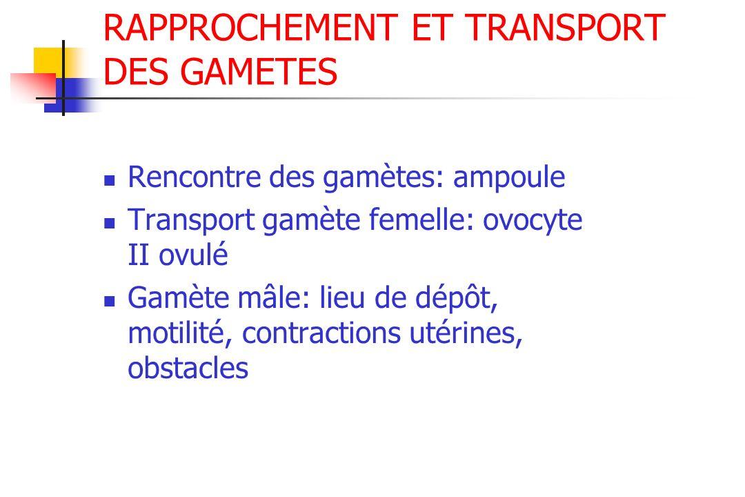 RAPPROCHEMENT ET TRANSPORT DES GAMETES Rencontre des gamètes: ampoule Transport gamète femelle: ovocyte II ovulé Gamète mâle: lieu de dépôt, motilité,