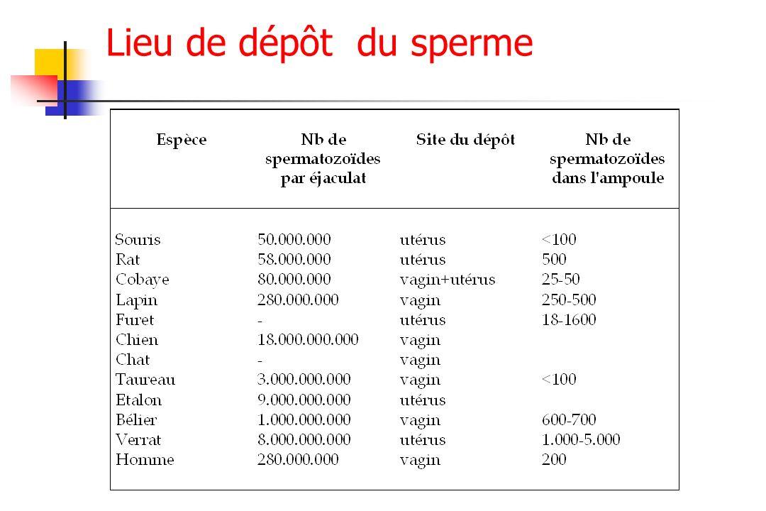 Lieu de dépôt du sperme
