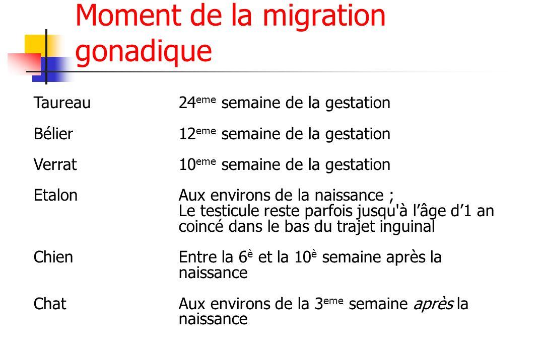 Moment de la migration gonadique Taureau24 eme semaine de la gestation Bélier12 eme semaine de la gestation Verrat10 eme semaine de la gestation Etalo