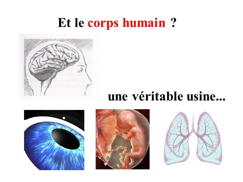 Et le corps humain ? une véritable usine...