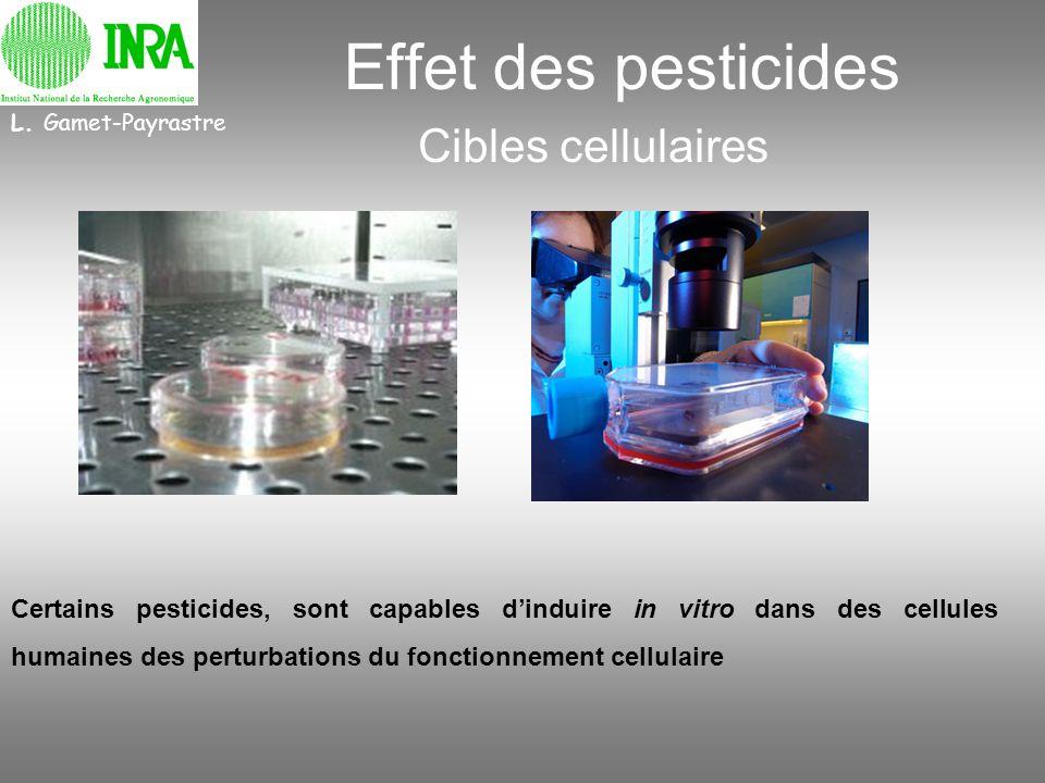 L. Gamet-Payrastre Effet des pesticides Cibles cellulaires Certains pesticides, sont capables dinduire in vitro dans des cellules humaines des perturb