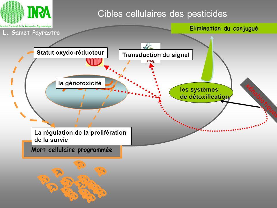 L. Gamet-Payrastre Cibles cellulaires des pesticides Elimination du conjugué les systèmes de détoxification xénobiotiques Mort cellulaire programmée T