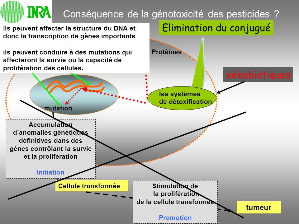 Elimination du conjugué les systèmes de détoxification xénobiotiques mutation RNA, Protéines Cellule transformée Stimulation de la prolifération de la